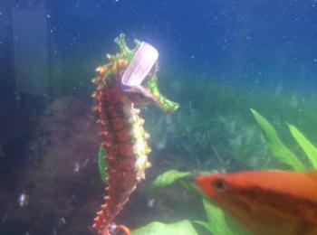 Pleasure Time Aquariums